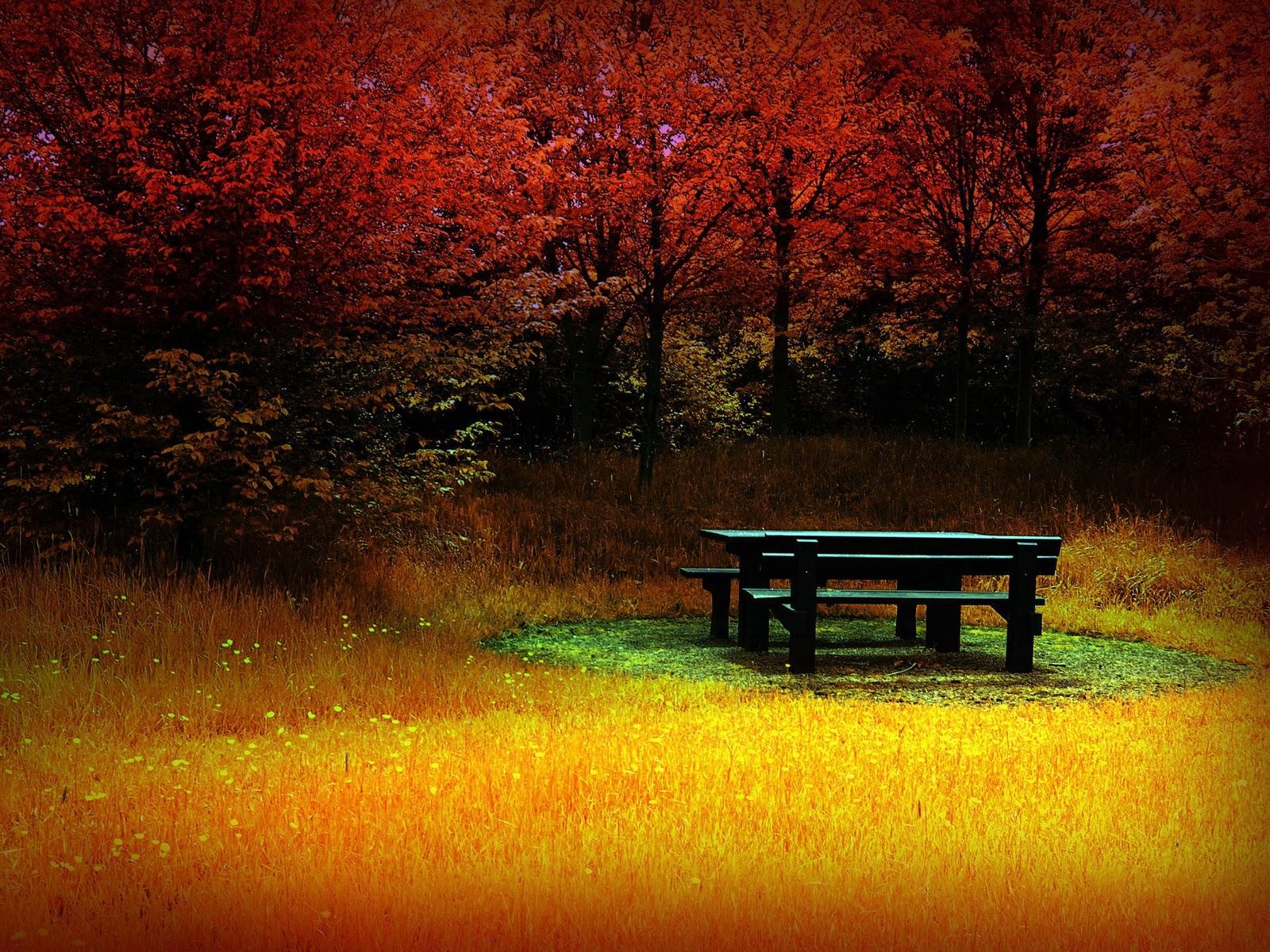 The best top autumn desktop wallpapers 31 En Güzel Sonbahar HD Duvar Kağıtları