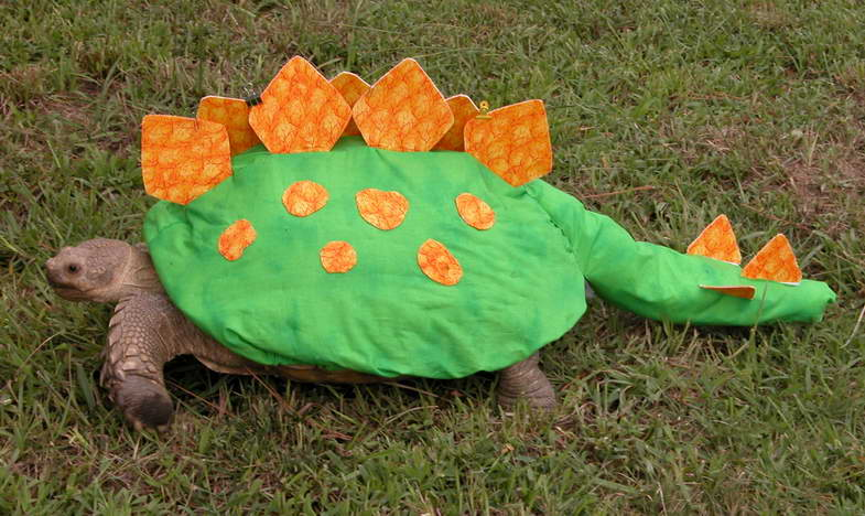 October 16 2009 : tortoise halloween costume  - Germanpascual.Com