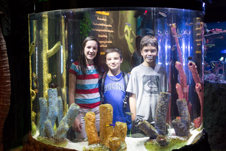 Arizona Sea Life Aquarium