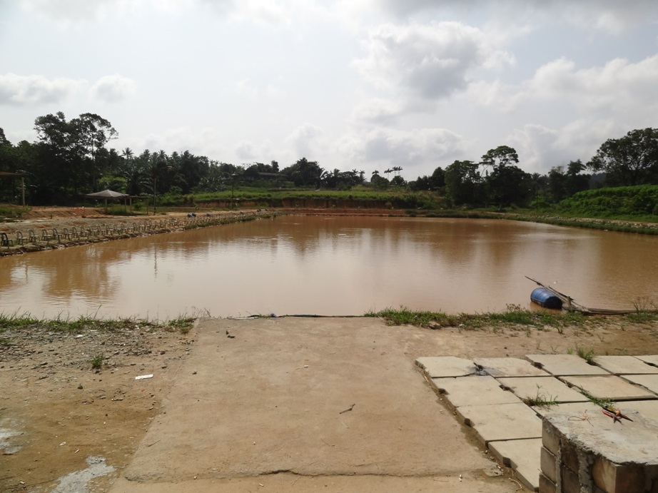 Kaseh inas freshwater fishing pond fishing spots in johor for Freshwater pond fish