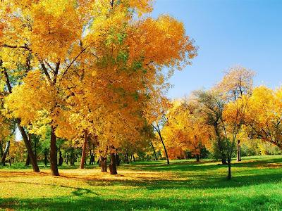 Autumn Season Standard Resolution Wallpaper 29