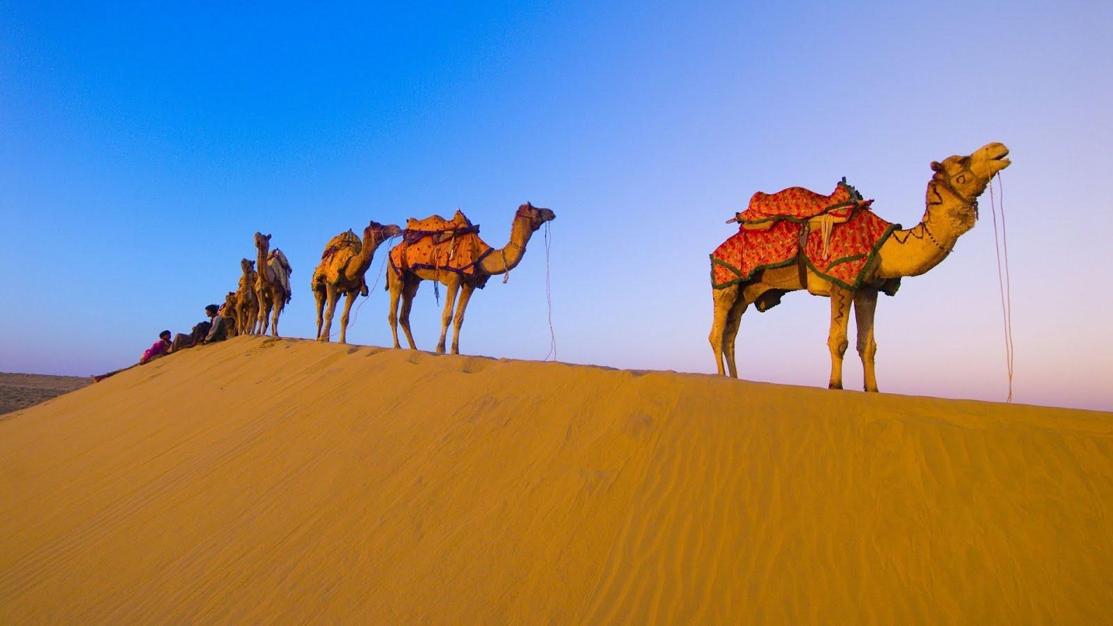 все о пустынях: