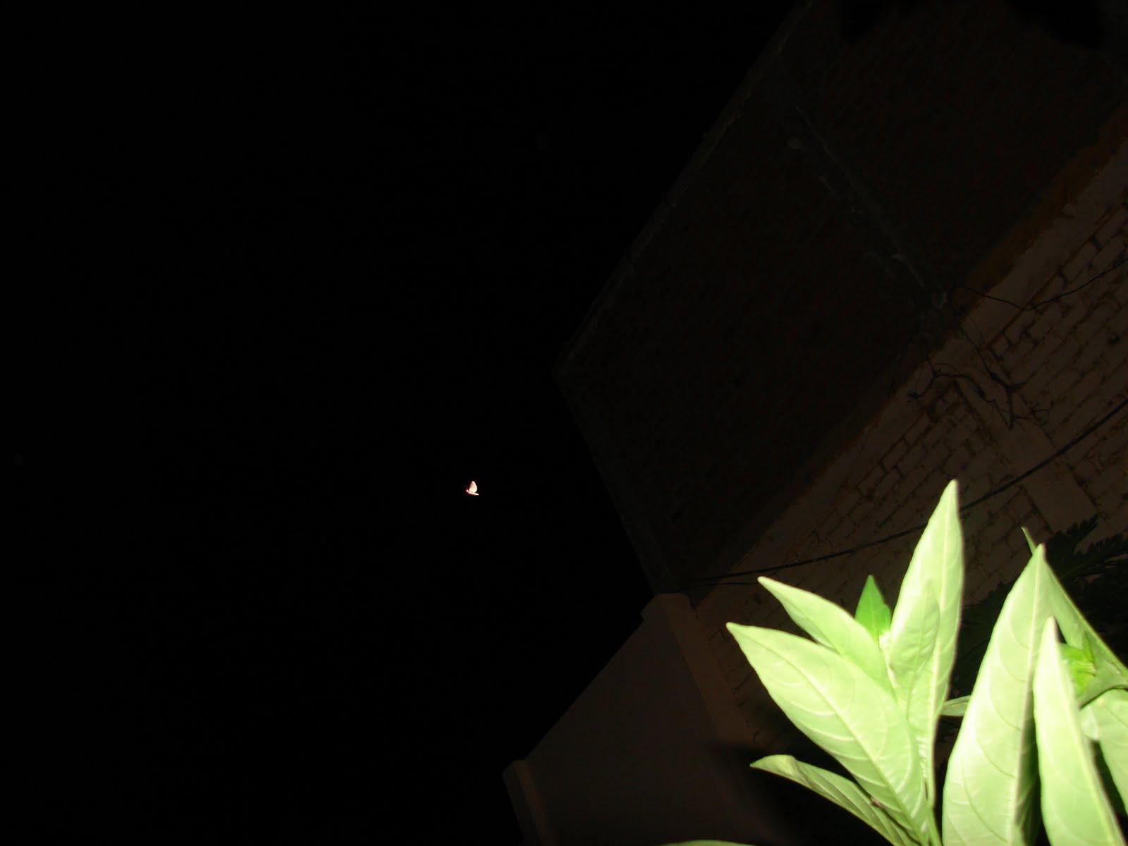 ATENCION-15-mAYO-16-17-18-19...2011 Utimos avistamientos ET Ovni-´´MARIPOSA´´ sec.hrs 2:06:40 am ..