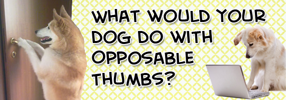 Opposable thumb definition of Opposable thumb by