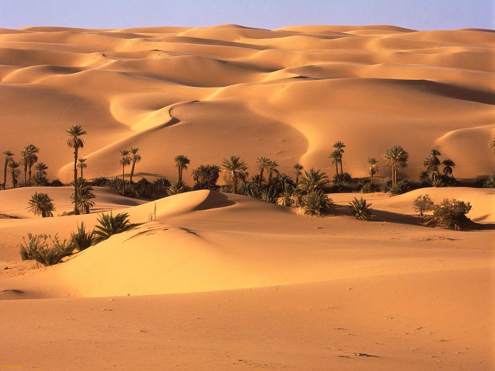 http://3.bp.blogspot.com/-6U2DmOrzE3k/TtouLHs9ddI/AAAAAAAABl0/JvKqxUSqgaQ/s1600/Oasis_Desierto_de_Libia-430167.jpeg