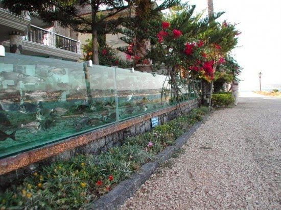 The Mehmet Ali Gökçeoğlu, a successful businessman and engineer surveyor from Turkey has created the most amazing fence in the world in luxury villa in Cesme, Izmir. Eight years ago, replaced the metal fence at the front of the house with a large aquarium 50 meters in length, packed with hundreds of fish and other marine species. The home of eccentric Turku is now one of the most popular tourist attractions in Cesme, attracting thousands of visitors each day who come to admire the strange creation.