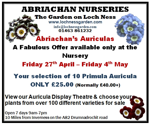 Abriachan Nurseries 2012 Auricula Offer - Online Catalogue Available