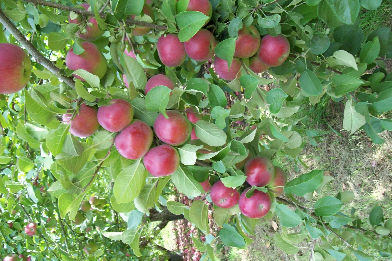 plant a tree save the planet one tree at a time apple trees will bear