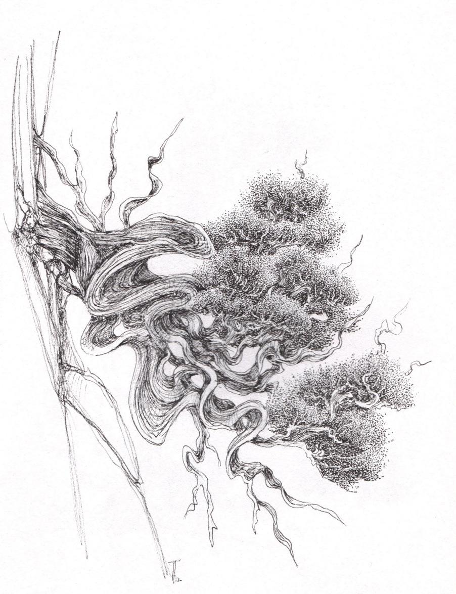 Bonsa sakurama dessins genevriers 2013 - Dessin bonzai ...