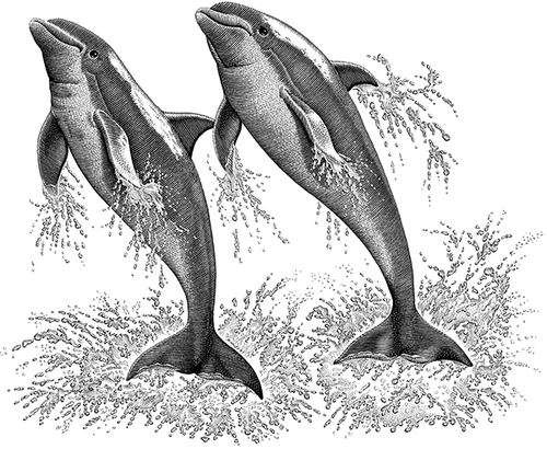 15-Dolphins-Michael-Halbert-Scratchboard-Images-of-Animals-and-Architecture-www-designstack-co