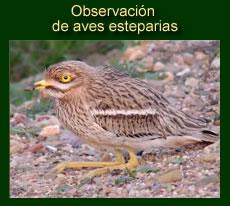 http://iberian-nature.blogspot.com.es/p/ruta-tematica-observacion-e_3135.html
