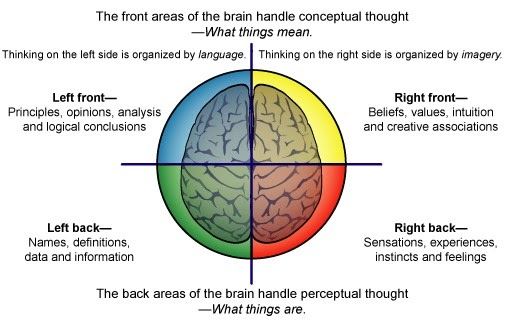 The Four Regions Of The Thinking Brain Made Simple Part