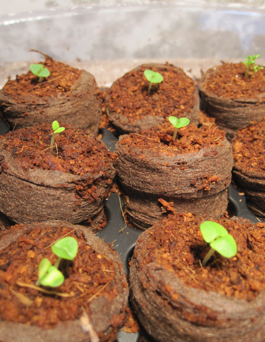 how to get seeds to sprout