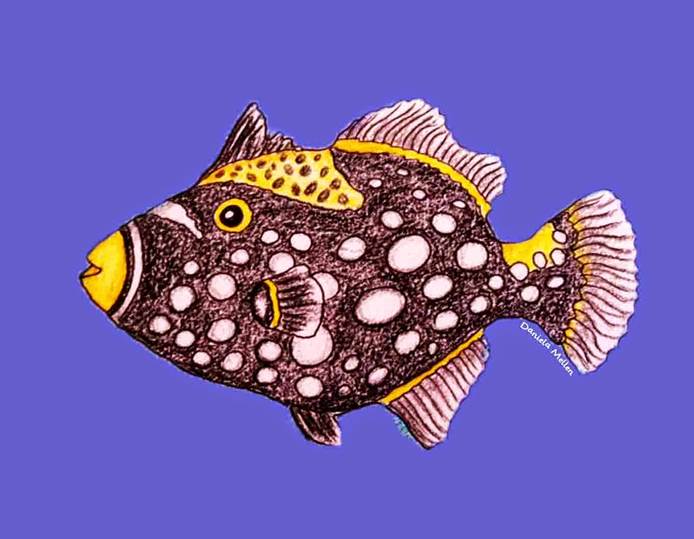 trigger fish coloring pages - photo#30