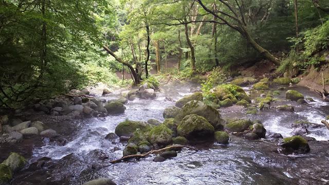 A wooded stream in Tochigi, Japan