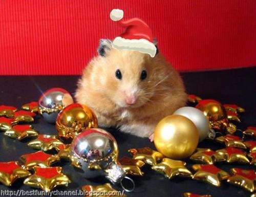 Hamster Santa.