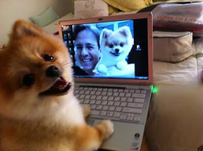 Cachorro no PC