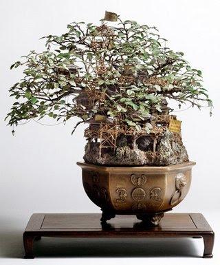 bonsai-unik-4