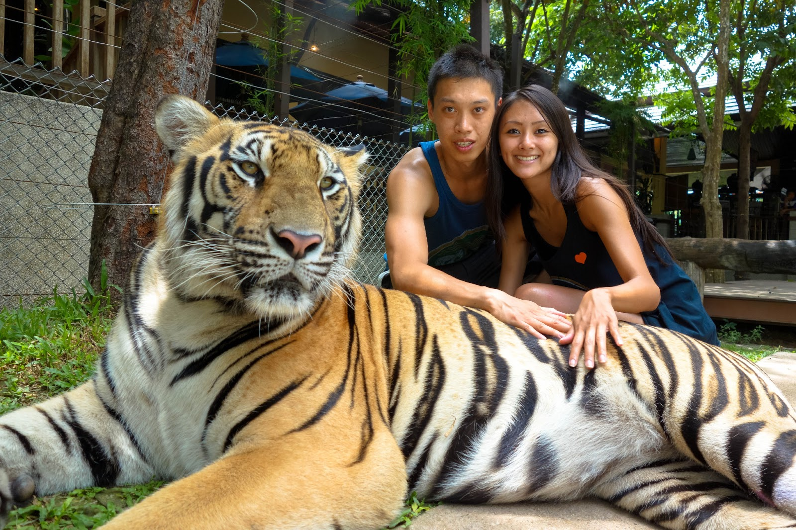 Blog feed good times at tiger kingdom orchid farm and - Show me a picture of the tiger ...