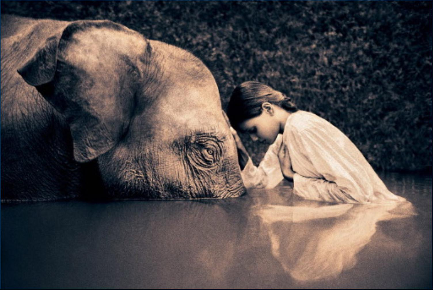 Elephant and woman - Gregory Colbert