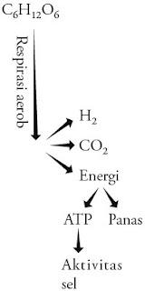 Energi respirasi tumbuhan