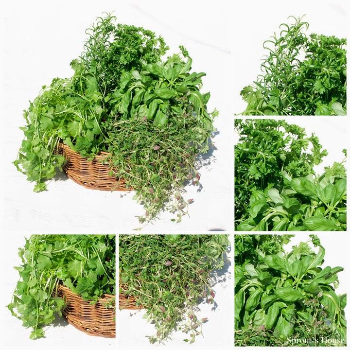 Indoor Herb Garden Tutorial Sprout 39 S House