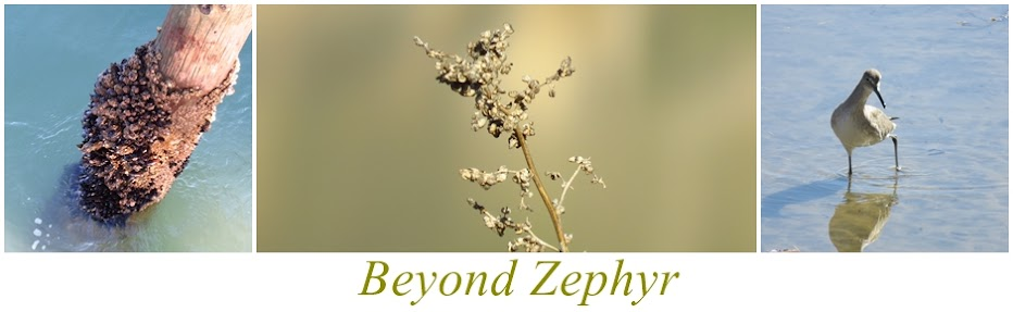Beyond Zephyr