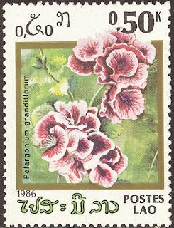 1986 Pelargonium Grandiflorum, Laos
