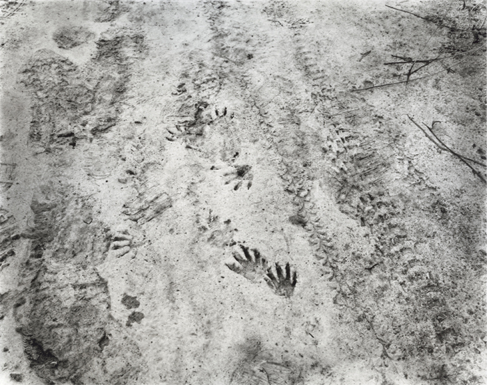 Wild Animal Paw Prints http://southphotography.blogspot.com/2013/01/allison-barnes-and-eleanor-owen-kerr-on.html