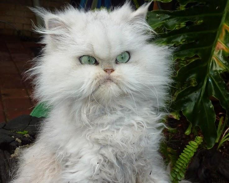cool cat gifs