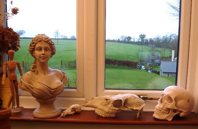 the skulls in my studio