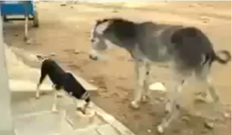 Dog Vs Donkey Whatsapp Funny Videos Must Watch