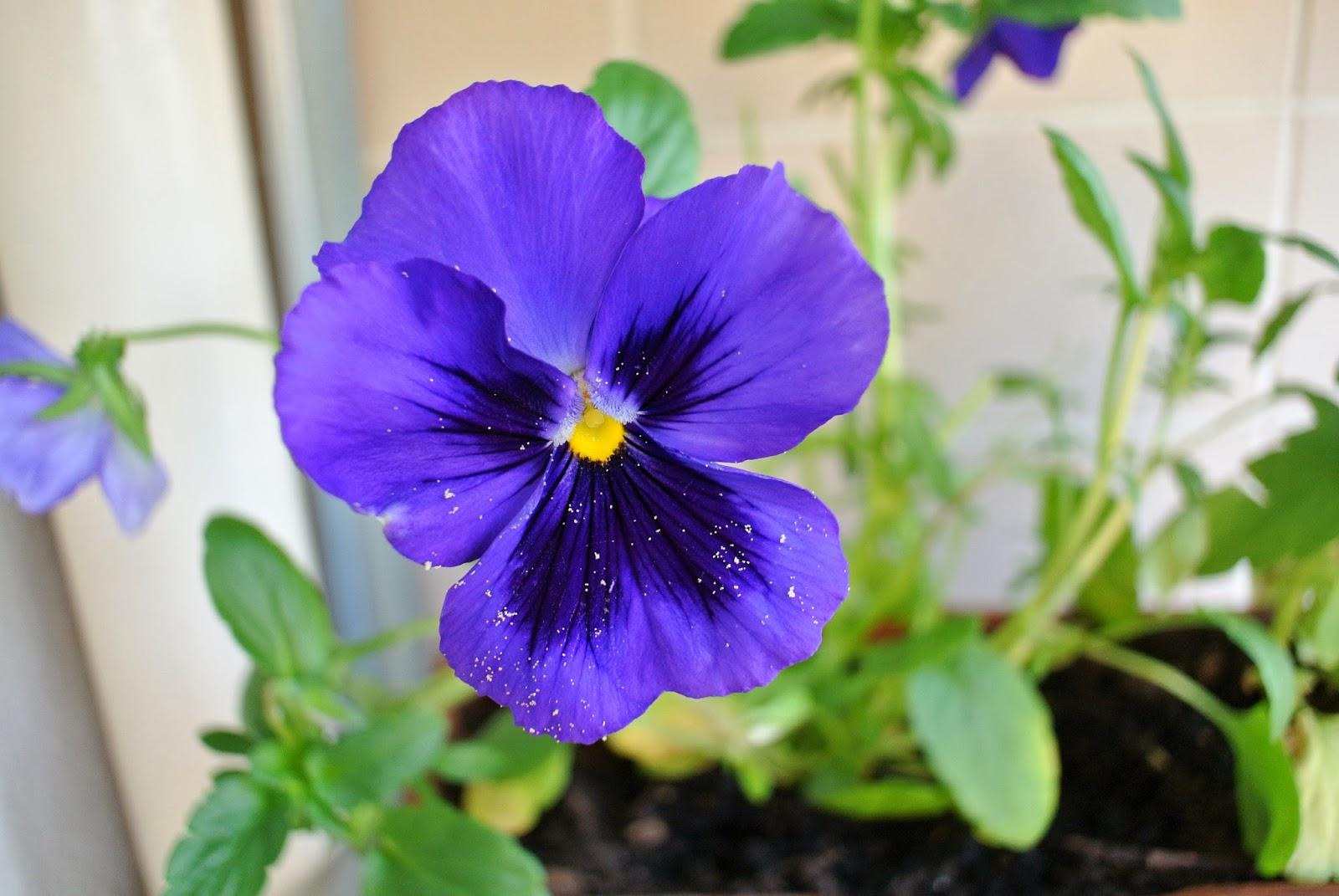 Le blog de Gabrielle Aznar: Mon jardin de balcon * Idu00c3u00a9es de ru00c3 ...