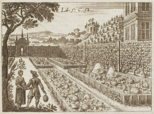 17th century engraving of mellon patches in walled garden