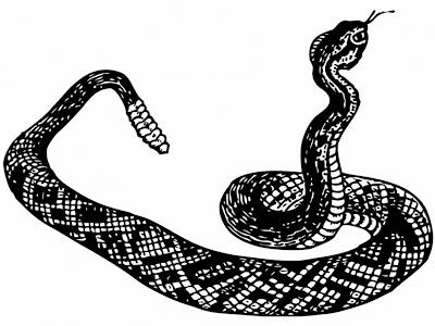 serpiente-de-cascabel-bicha