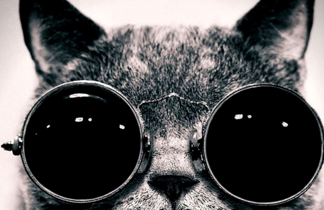 View Original Size Cat With Cosmos Glasses