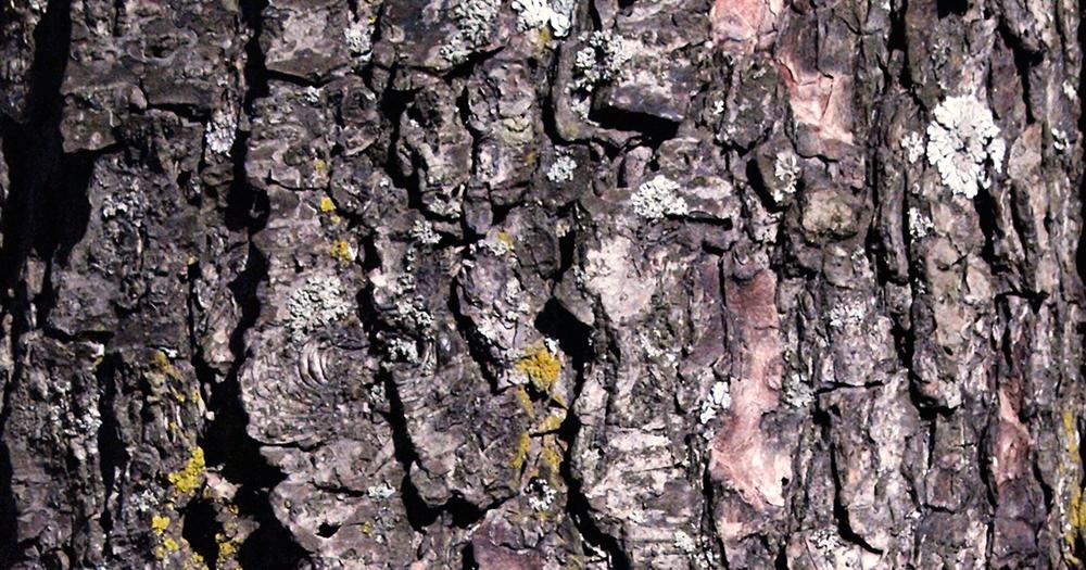Grand Tree  RuneScape Wiki  FANDOM powered by Wikia