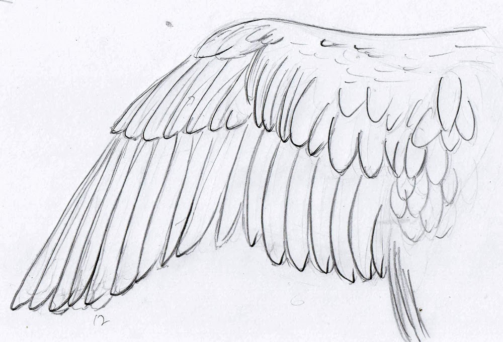 Weekly  Doodles And Tuts Drawspace Lesson M02 How To Draw A Wing.