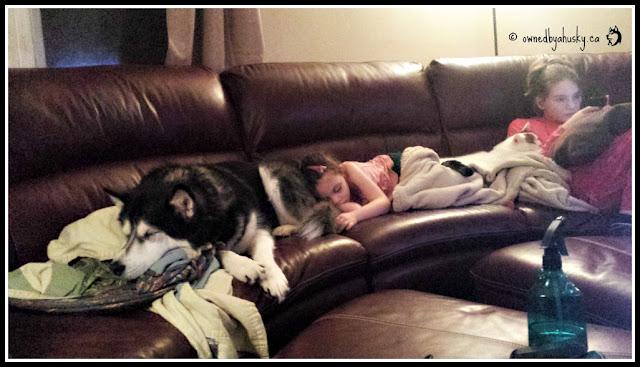 Huskies and children