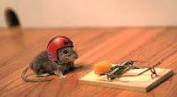 Raton buscando queso