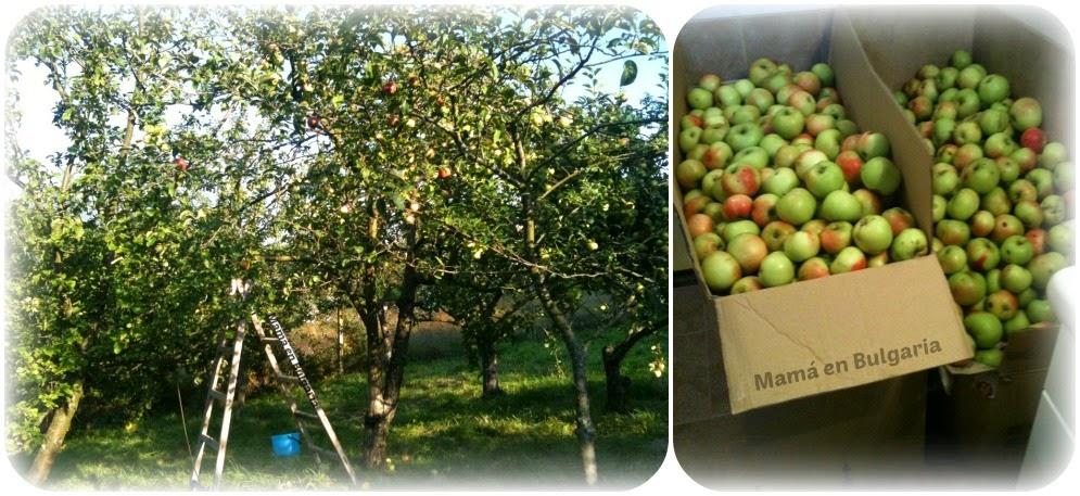 recolectando manzanas, Bulgaria