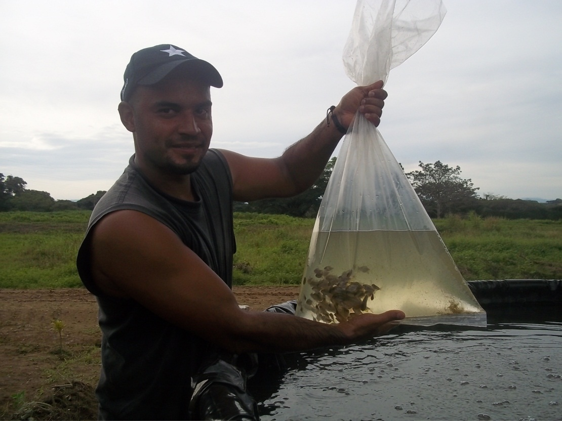 Www agroecologia vallesdeltuy blogspot com tanques zamoranos for Cria de tilapia en estanques plasticos