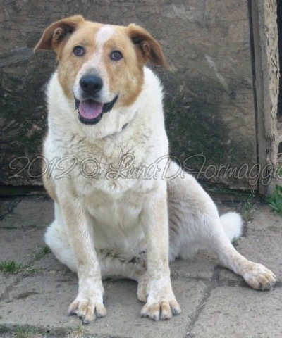 Adotta un cane anziano agosto 2012 for Cane zampe posteriori cedono