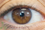 This brown eye is only the third to have contraction furrows, those lighter .