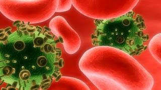 Leite materno combate transmissão oral por HIV em estudo com ratos