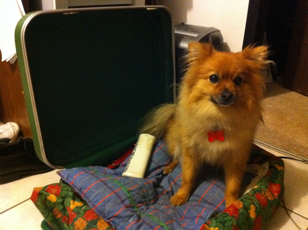 upcycle suitcase for dogs