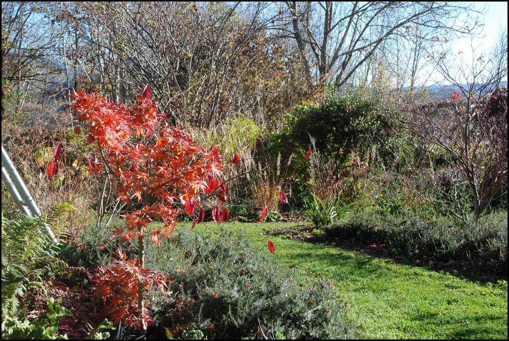 le jardin du mayet fin de l 39 automne. Black Bedroom Furniture Sets. Home Design Ideas