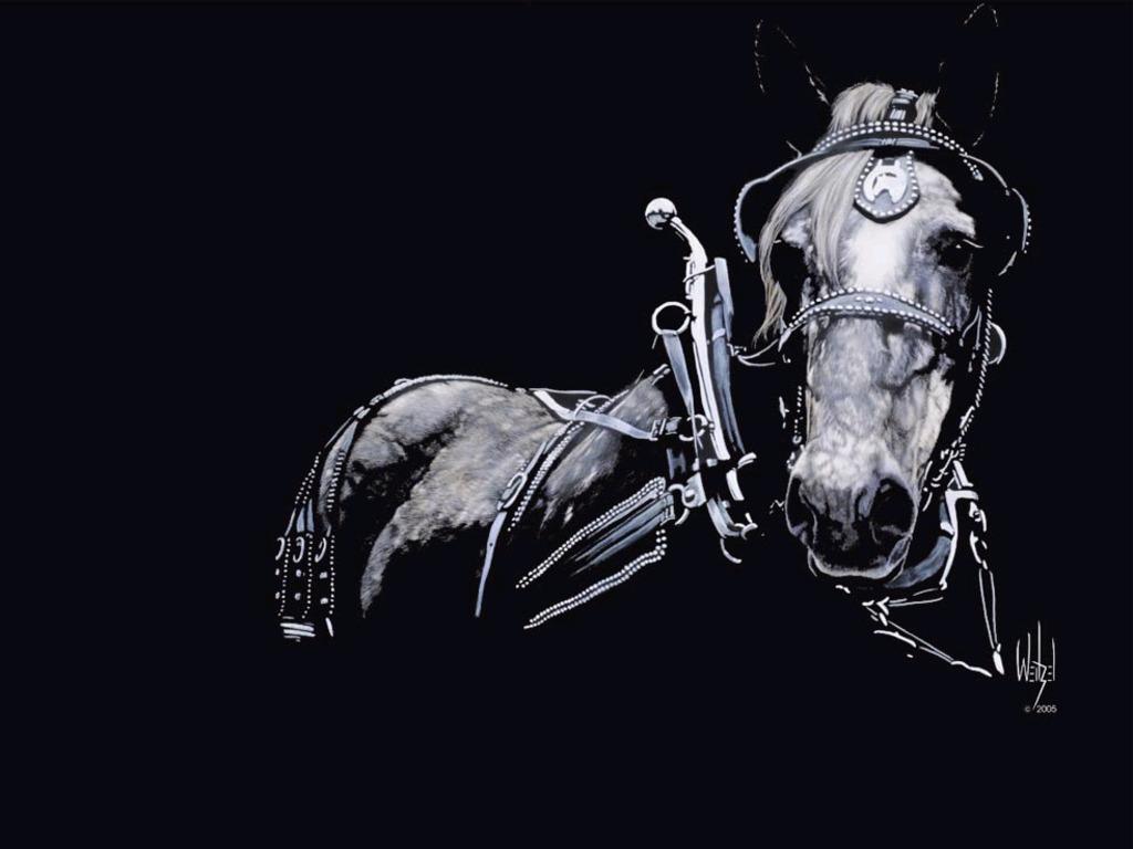 Great   Wallpaper Horse Creative - Black_%2526_White_Horse_Wallpaper  Photograph_672210.jpg
