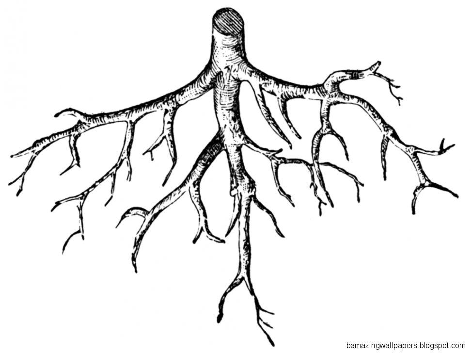 Roots Clip Art