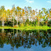 Disney Wilderness Preserve em Orlando